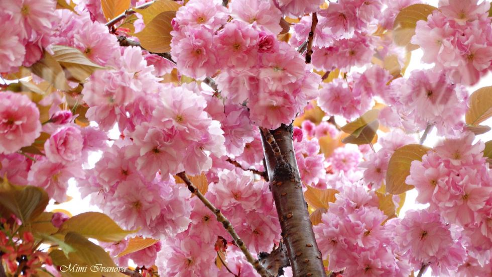 В приказния свят на пролетта