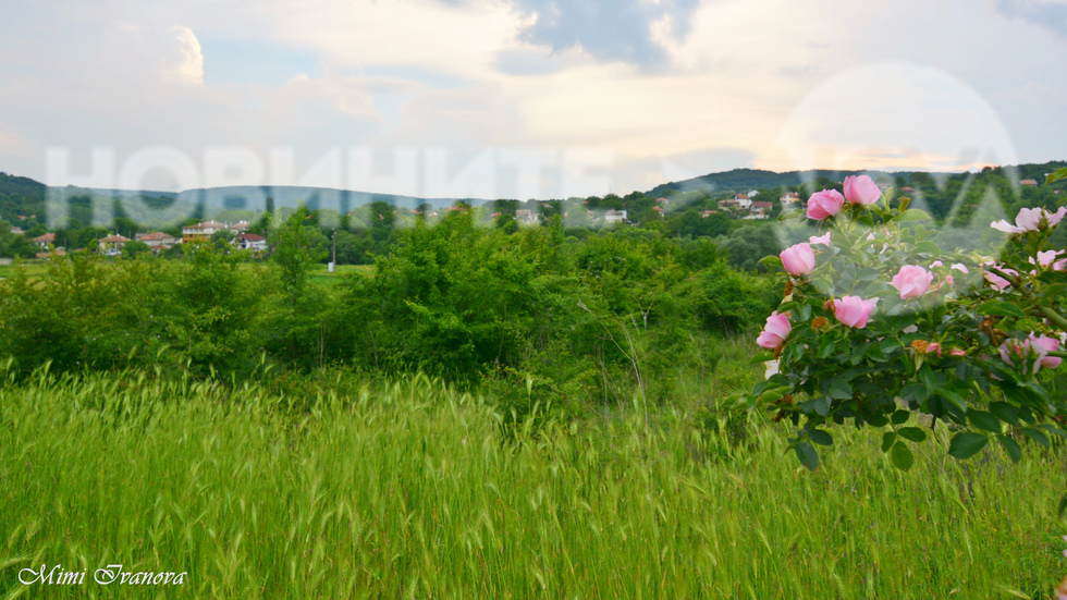 Сред красивата свежа природа на Долище