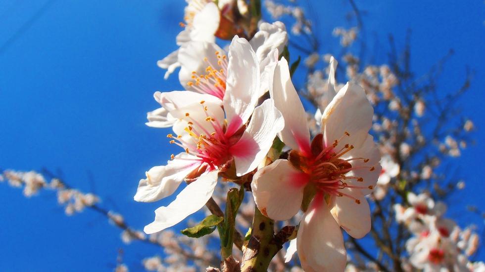Пролетни картини