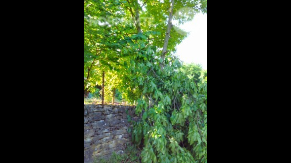 Безобразно изрязано дърво от ЧЕЗ