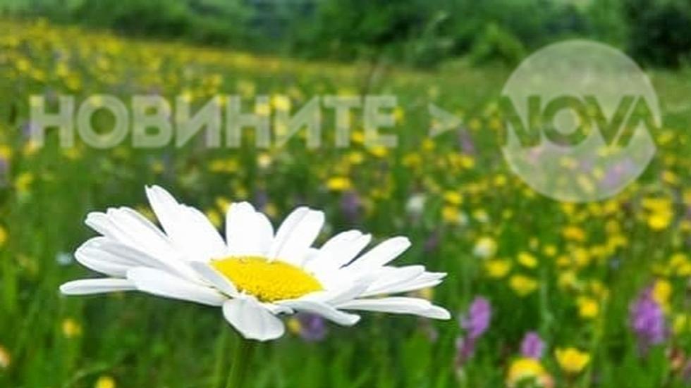 Пролетна полянка