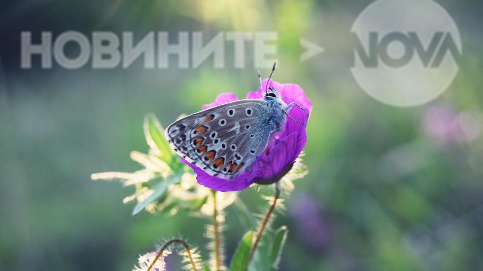 Пеперудено лято