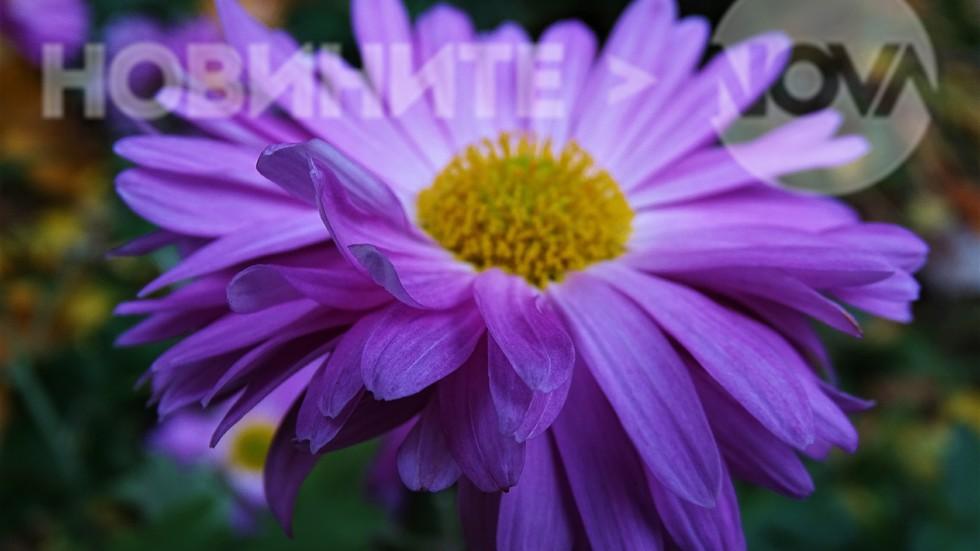 В цвят лилав