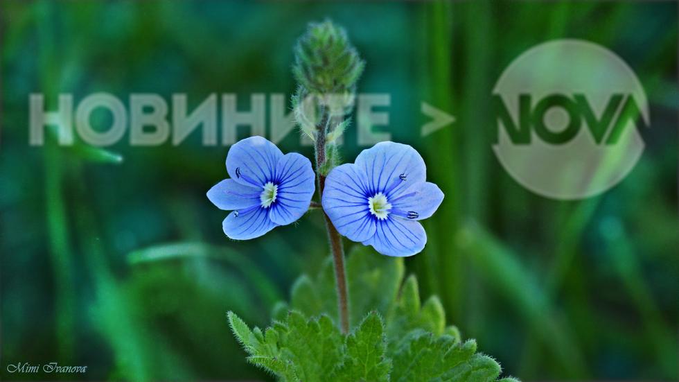 Изкуството - това са цветята на живата природа!