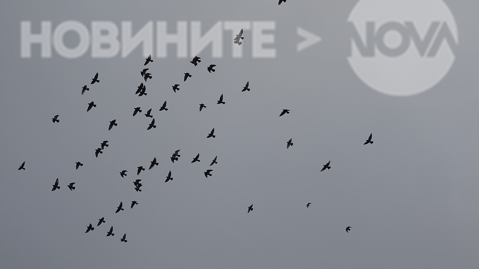 Волен полет