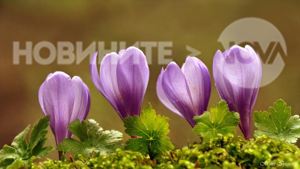 Пролетно настроение...