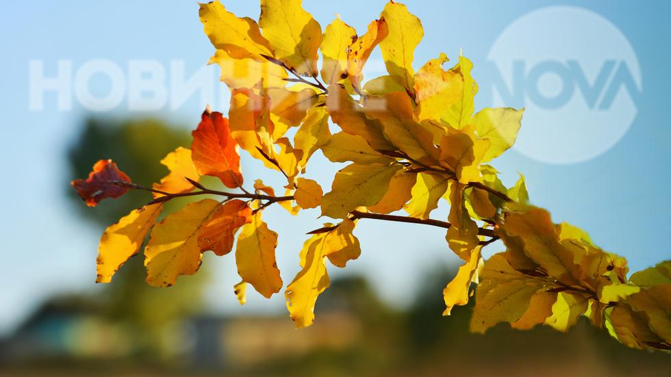 Клонка есенно очарование...
