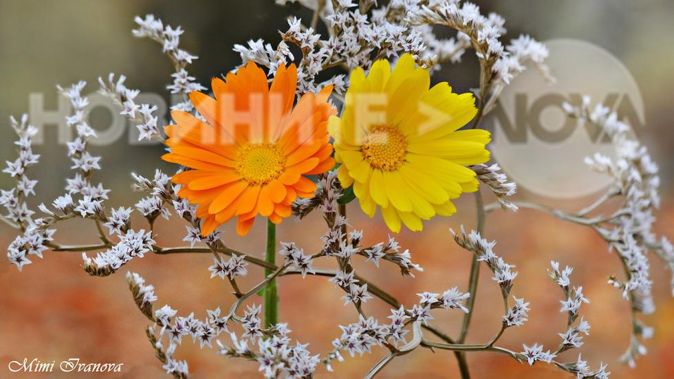 Цяла зима ни радват с цветното си присъствие...
