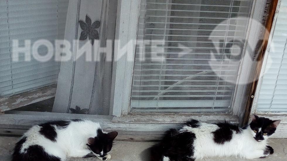 Котета близнаци