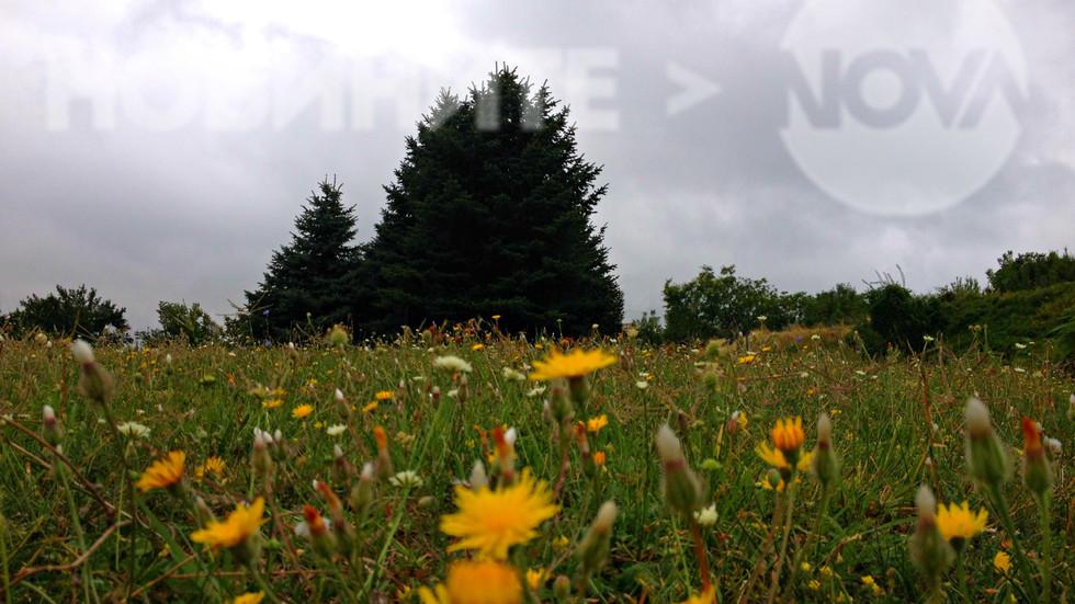 Днес в Скобелев парк, Плевен
