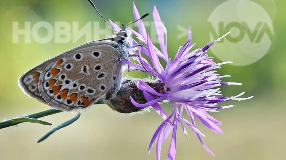 Вълшебните пеперудки