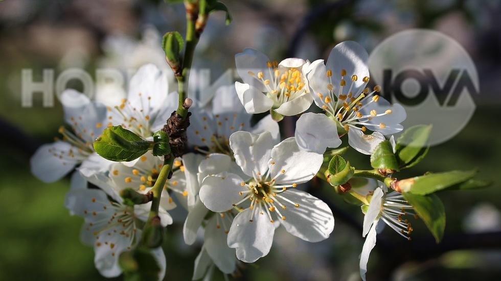 Бяла пролет