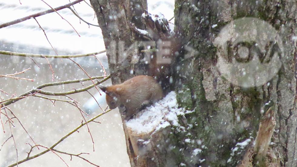 Катеричката наблюдава снега!