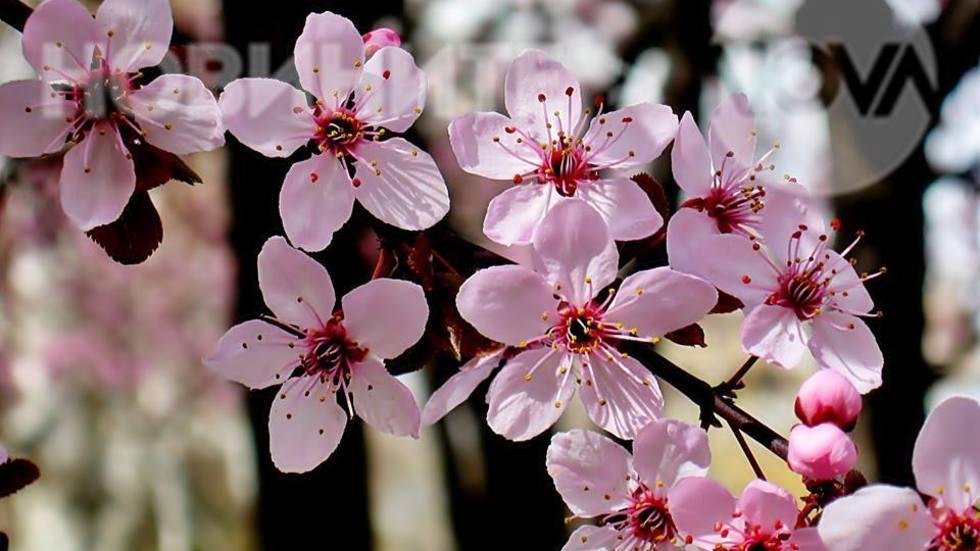 Красивата пролет вече е тук