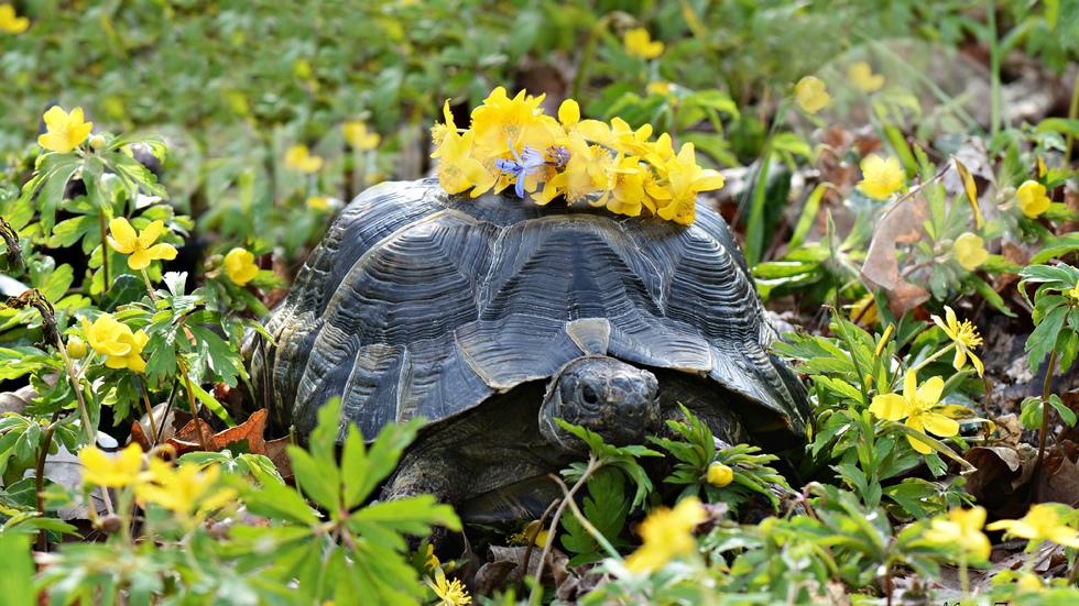Пролетен поздрав за всички!