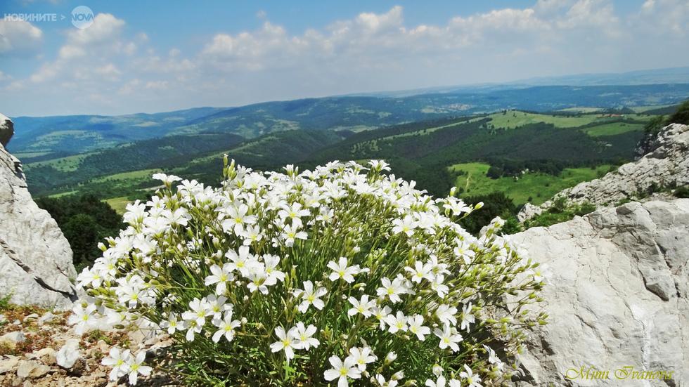 Високо, от котленска Стара планина