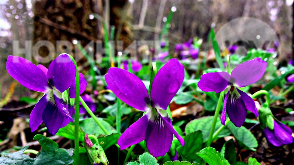 Пролетни ухания в дъждовната гора