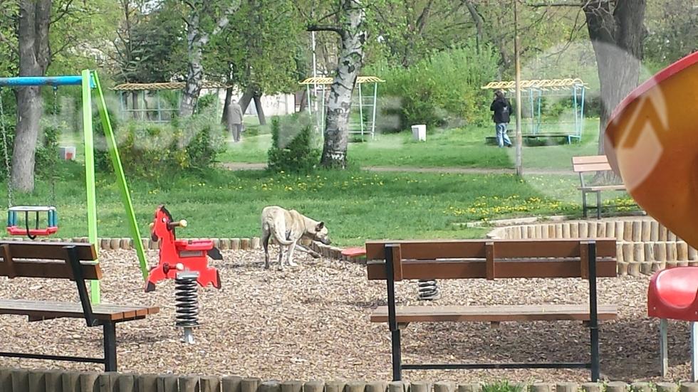 Детска площадка в столицата