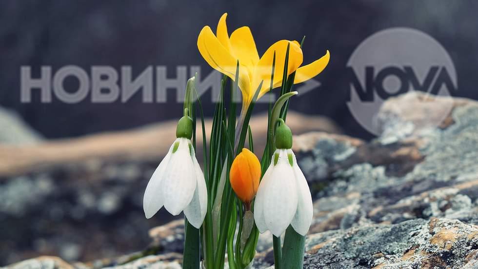 Пролетна прегръдка за вас