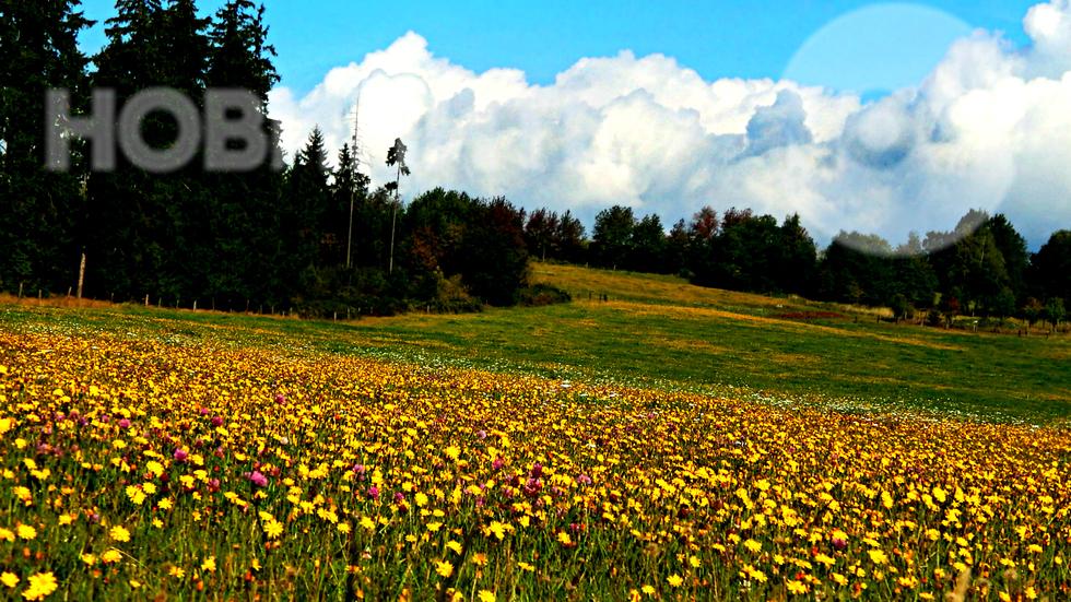 Пролетно настроение за Деня на гората