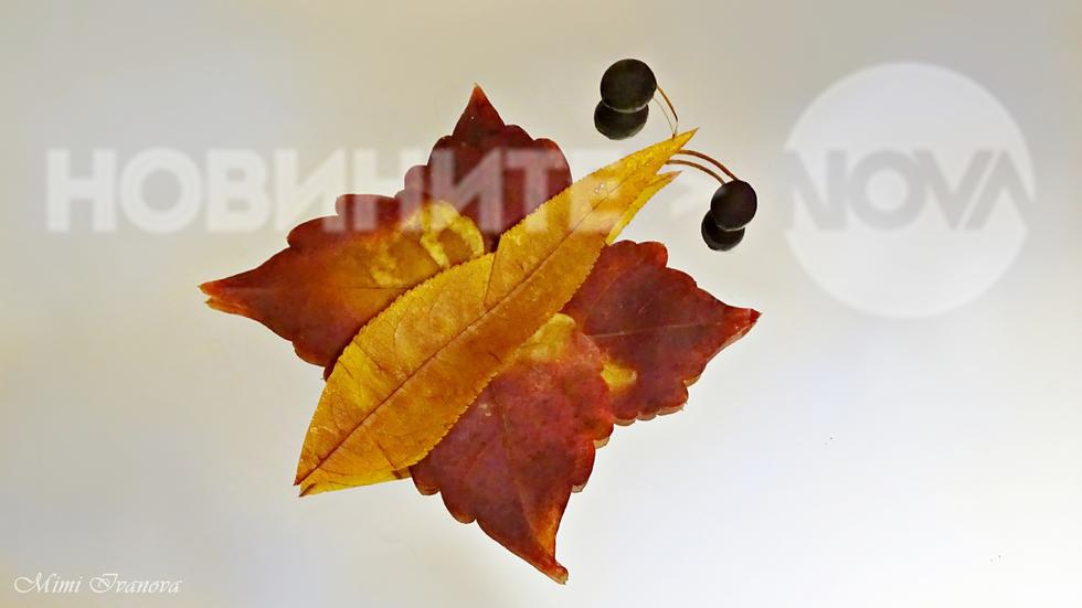 Есенна пеперуда.. :)