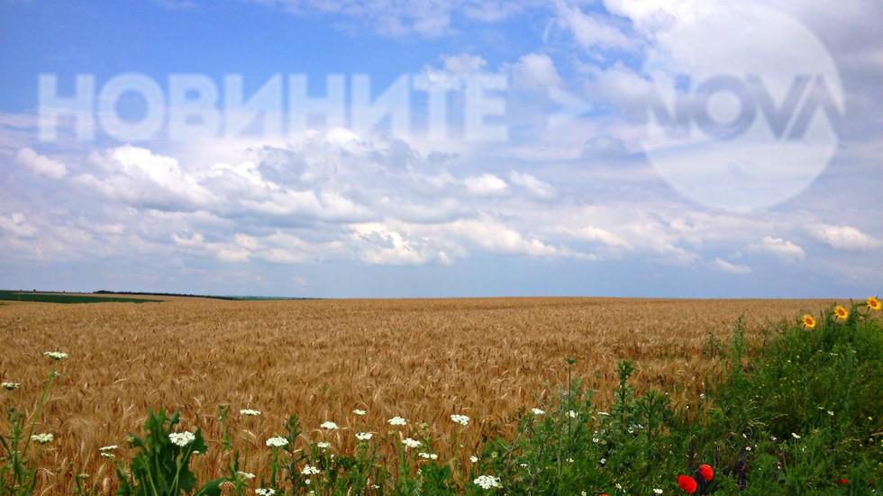 Цветно и красиво е полето днес
