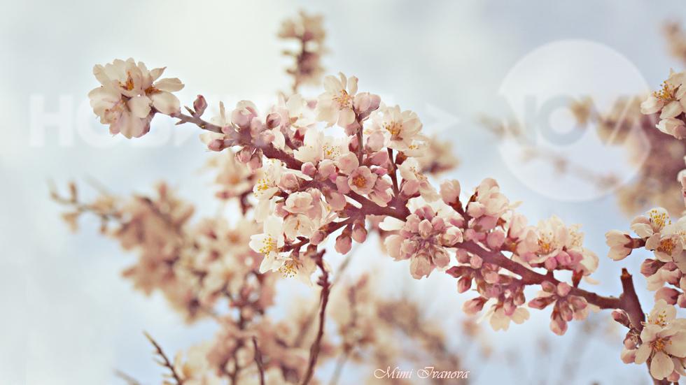 Пролетно настроение