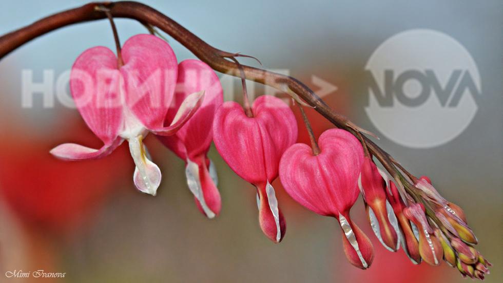 Пролет..твоето име е Любов!