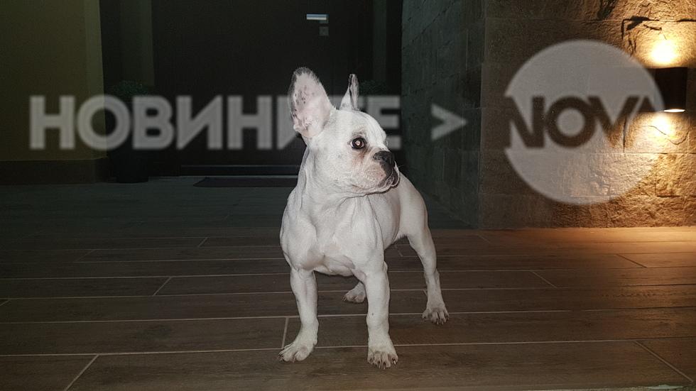 Изгубено любимо кученце