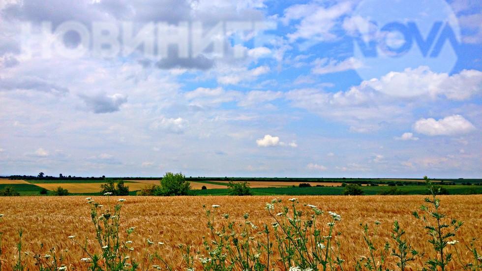Топлият бакърен цвят на зреещото жито