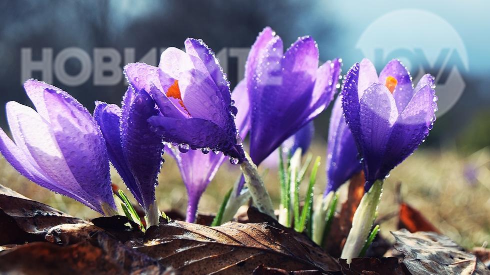 Пролетта ни разкраси