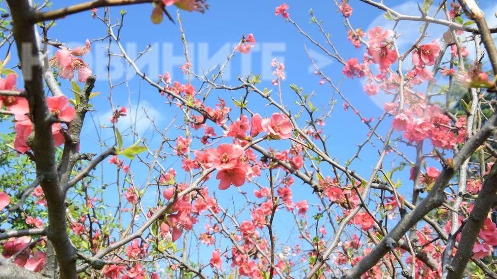 Розова пролет