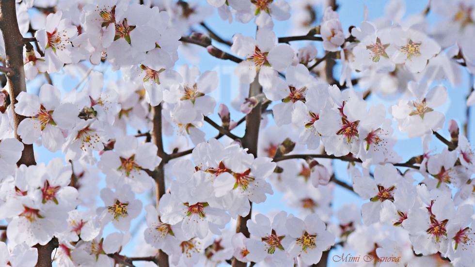 Приказна пролет е навън