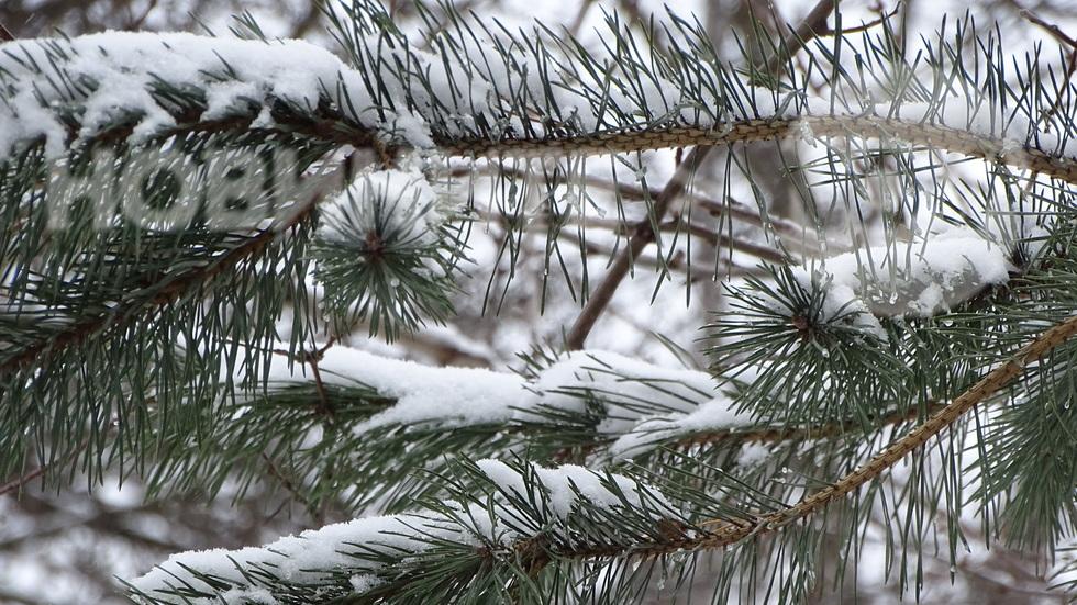 Снежни