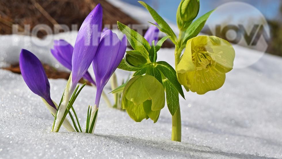 Зима и пролет в едно