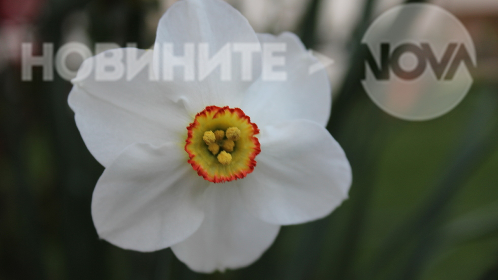 Изящно бяло