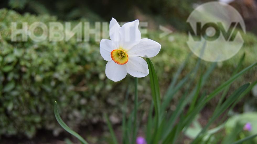 Пролет в Павел баня
