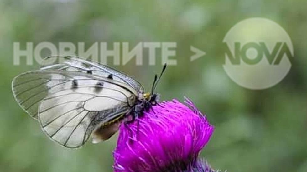 Пеперудено време