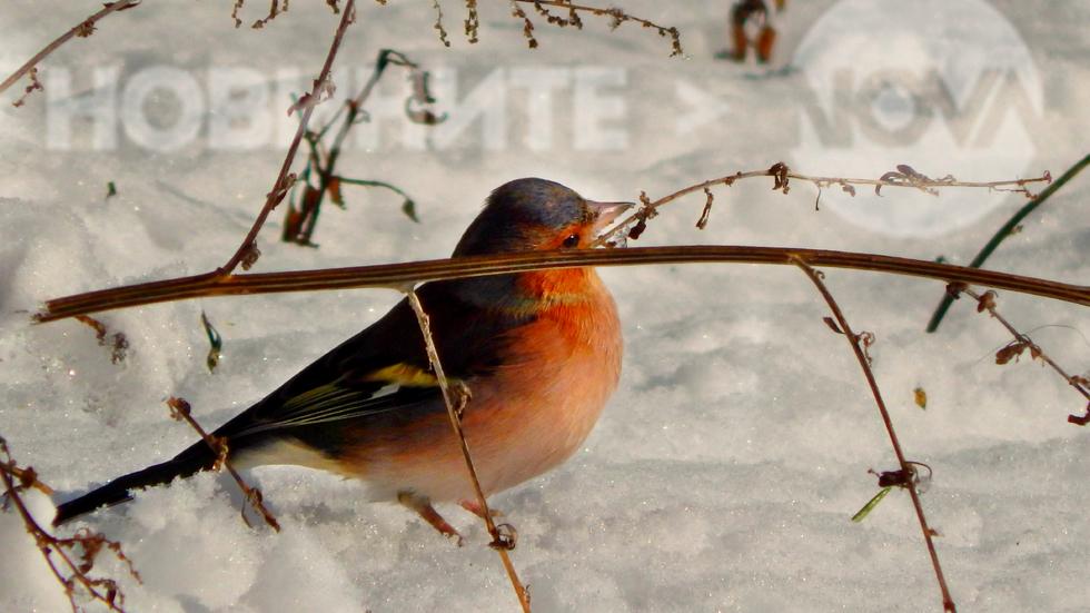 Малко приятелче в снега :)
