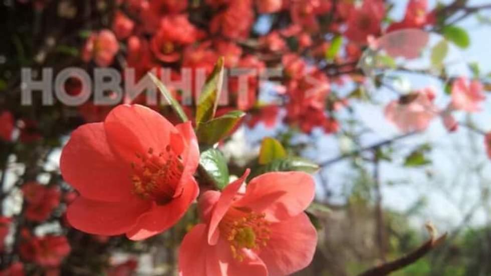 Пролет в розово