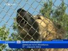 Домашно куче обезобрази 37-годишна жена