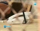 Телефонни измамници атакуваха цяло село