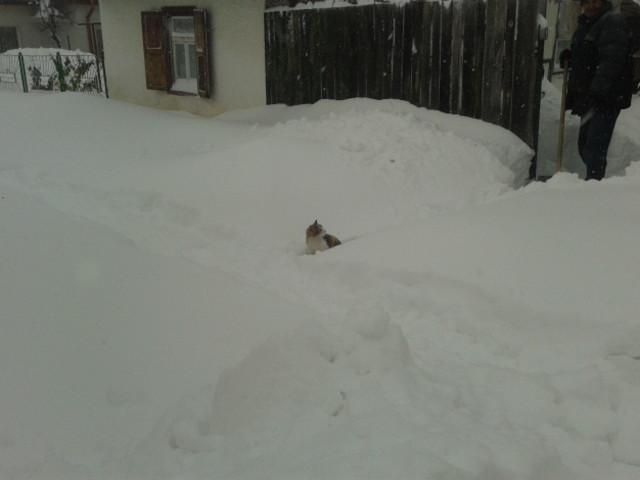 """В Силистра имаме """"малко"""" сняг! 1"""
