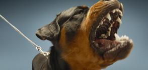 Бащата: Кошмар е да видиш детето си, разкъсвано от звяр (ВИДЕО)