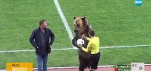Не съдия, а мечка даде началото на мач в Русия (ВИДЕО)