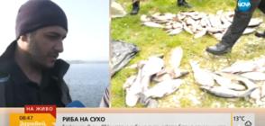 Бракониер изхвърли 80 кг риба от колата си, бягайки от полицията