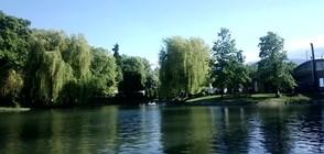 Езерото в Борисовата градина – с новоизлюпени обитатели (СНИМКИ)