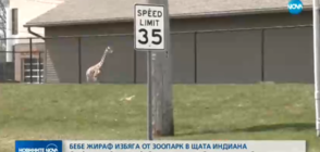 Бебе жираф избяга от зоопарк в САЩ (ВИДЕО)