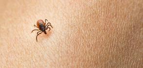 Увеличават се болестите, пренасяни от насекоми