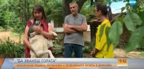 """""""ДА ХВАНЕШ ГОРАТА"""": Как англичани решиха проблема с бездомните кучета в Дряново?"""